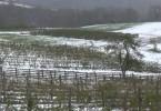 sneg steta vocnjaci pozega