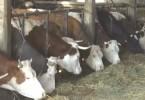zlatiborski eko agrar plan za 2018