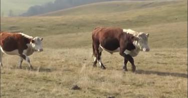 Zlatiborski eko agrar.mpg.Still001