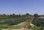 poljoprivreda arilje.mpg.Still001
